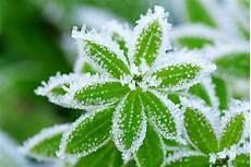 so kommen ihre pflanzen schadlos durch den winter