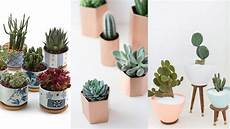 Pflanzen Zu Hause - 5 indoor plants and flowers you should get home this summer