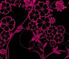48 pink and black wallpapers wallpapersafari