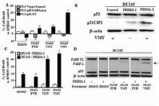 expression of wild type p53 but not mutant p53 restores vmy download scientific diagram