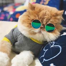 Katze Mit Sonnenbrille - pet cat glasses glasses pet products for