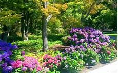 hortensien umpflanzen september das gr 252 ne archiv hortensie aussaat pflege sorten