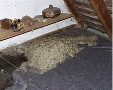 wespennest auf dem dachboden