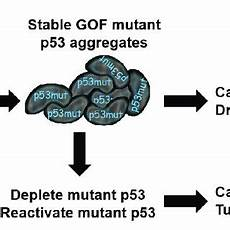 gof mutant p53 proteins form stable aggregates in cells and promotes download scientific