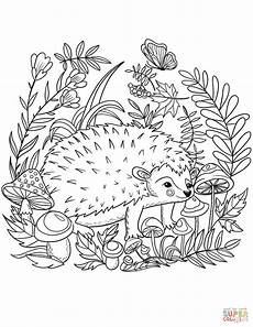 hedgehog coloring page free printable coloring pages