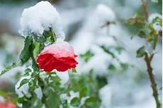 schneiden winter schneiden im winter 187 keine gute idee