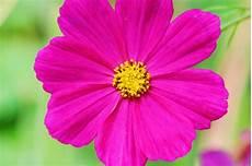 blume lila gt lila blume leinwandbild auf keilrahmen bestellen