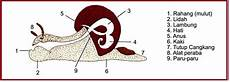 Biologi Gonzaga Gastropoda Mollusca
