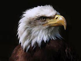 Image result for Eagle Artwork