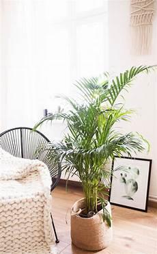 große pflanzen fürs wohnzimmer 5 pflegeleichte zimmerpflanzen f 252 r euer zuhause pflegeleichte zimmerpflanzen wohnzimmer