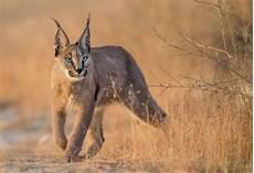 sedere piu bello al mondo l animale pi 249 bello mondo mille animali