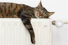 heizkörper nur oben warm heizk 246 rper wird nur oben warm ursachen und tipps