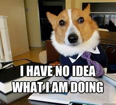 i have no idea how i do it i have no idea what i am doing lawyer dog quickmeme