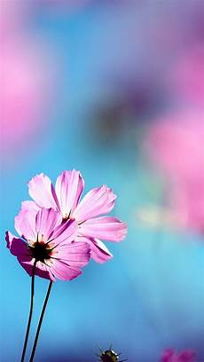 flower wallpaper for phone screen 100 hd phone wallpapers for all screen sizes