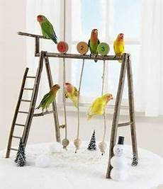 Wellensittich Spielzeug Selber Bauen - pet bird diy ideas diy small pet swing set pet bird