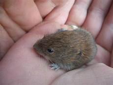 Was Essen Mäuse In Der Natur - ich habe eine maus gefunden was bitte tipps geben