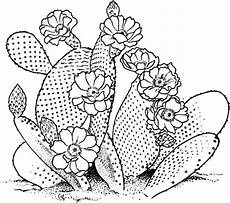 Cactus Plant Coloring Pages Blossom Cactus Flower Coloring Pages Blossom Cactus
