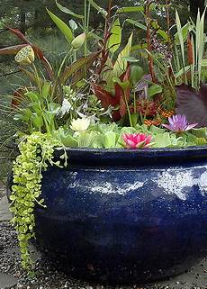 plants flowers 187 pistia turpinii