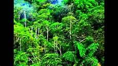 Bioma Hutan Hujan Tropis
