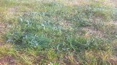 Wie Kann Ich Diesen Kaputten Rasen Wieder Quot Reparieren