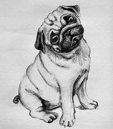 free printable drawing pages of pugs search