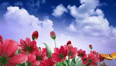 flower images hd gif flowers pictures inspirational beautiful flowers gif