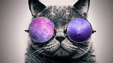 Katze Mit Sonnenbrille - cool cats wallpapers wallpaper cave
