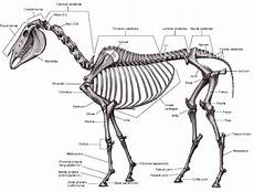 Sistem Gerak Pada Hewan Beserta Gambarnya Dosenbiologi
