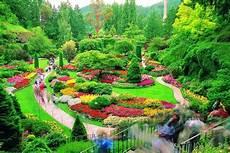 Gambar Gambar Bunga Terindah Di Dunia Dan Tercantik