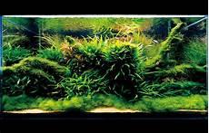 amano aquascape seahorse aquariums now suppling ada in ireland