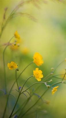 grass flower wallpaper iphone 10 free iphone wallpapers premiumcoding