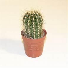 Cactus En Pot 216 6cm Mat 233 Riel Mur V 233 G 233 Tal Fr