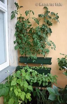 kräuter und gemüse auf dem balkon for sale der balkon ist f 252 r gem 252 se da