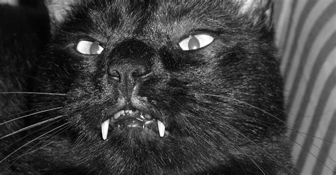 The Demon Cat Of The Nation's