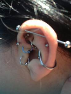 piercing helix et tragus pin by codi hitch on piercings