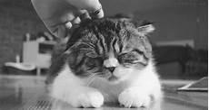 Kumpulan 21 Animasi Kucing Ngantuk Bergerak Animasi Dan