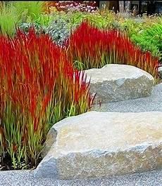 steingarten gräser winterhart ziergras baron gardening and landscaping garten