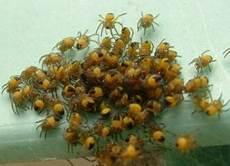 schnake im zimmer spinnengelege auf der terrasse haus garten forum chefkoch de