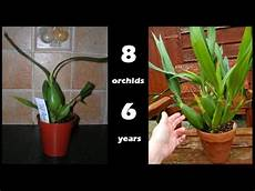 when orchid seedlings grow up 8 plants 6 years on