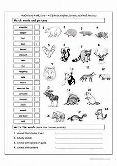 learning animals worksheets 13934 vocabulary matching worksheet animals from europe america esl