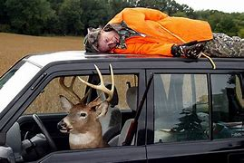 Image result for image deer tied to vehicle