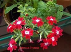 fiori di giugno fiori di giugno