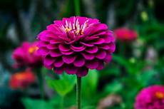 Beautiful Flower Picture