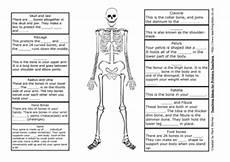 the skeleton teaching ideas