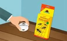 Ameisen Bekämpfen Wohnung - ameisen bek 228 mpfen 5 tipps zur vertreibung movu