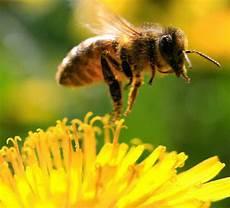 insekt an fauligem obst ohne bienen kein obst und gem 252 se bonndorf badische zeitung