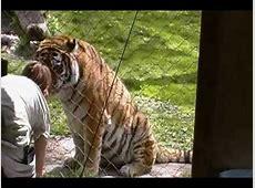 bronx zoo tiger mountain
