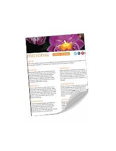 miltonia orchid care sheet orchid plant care