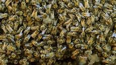 sterben bienen im winter kf gegen den k 228 ltetod wie 252 berwintern spinnen und