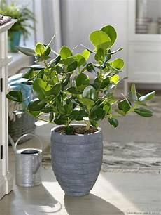 le pour plante 18550 4 plantes d int 233 rieur pour les collectionneurs d 233 tente jardin